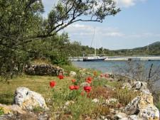 Pašman je ostrov plný zeleně.